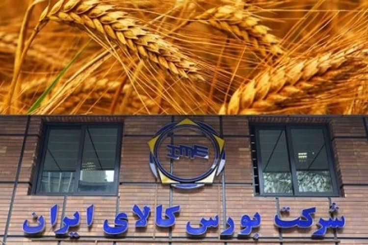 عرضه 41 هزار تن گندم خوراکی در قالب طرح قیمت تضمینی