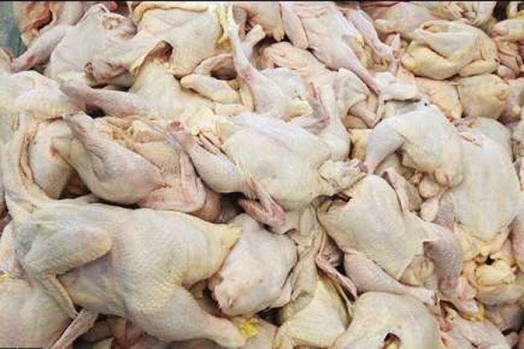 واردات مرغ ممنوع شد