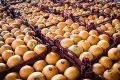 مشکلی در تأمین میوه شب عید نداریم