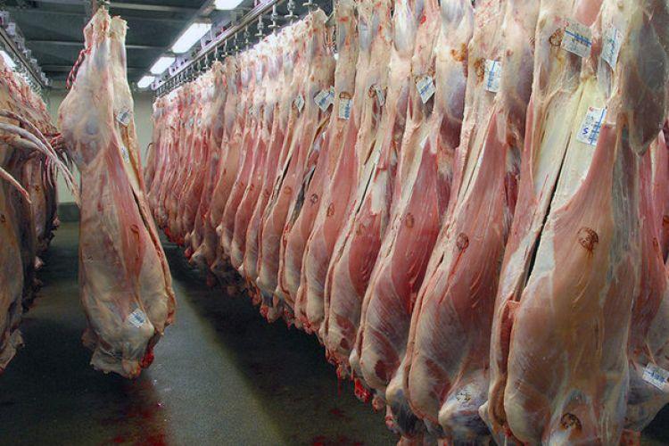 ذبح دام مولد و قاچاق دام، نرخ گوشت را افزایش داد/ گوشت 95 هزار تومانی نداریم/ گوشت 7 هزار تومان ارزان شد/ دامهای زنده در راه ایران