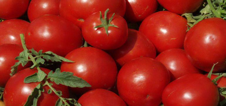 خسارت شدید تگرگ به تولید گوجه در جنوب/مردم خریدشان را مدیریت کنند