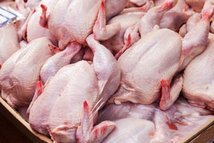 146 میلیون قطعه مرغ تولید شد