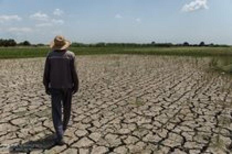 خسارتهای کشت برنج به منابع آبی در استان گلستان