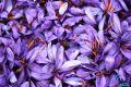 زعفران به کیلویی 12 میلیون و 500 هزار تومان رسید
