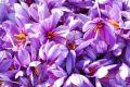 نفوذ بیشتر در بازار جهانی زعفران از مسیر بورس کالا