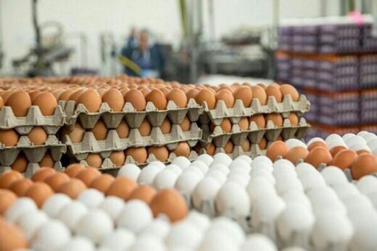 توقف صادرات تخم مرغ/ کاهش قیمت در راه است