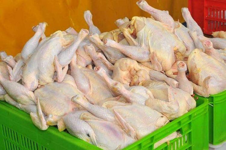مشکلی در تولید و عرضه محصولات پروتئینی وجود ندارد