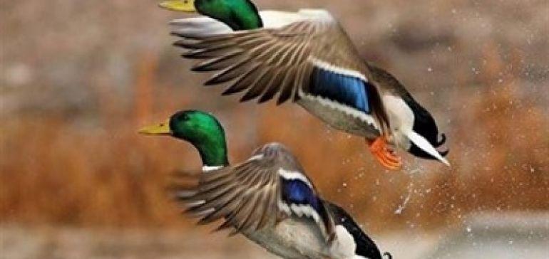 ویروس جدید آنفلوانزای پرندگان، قابل انتقال به انسان است