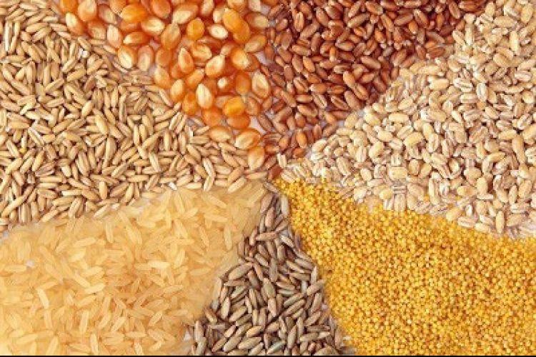 صادرات خوراک دام 33 درصد رشد یافت